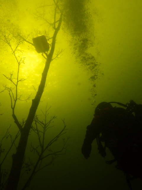unterwasserfotos_7_20141106_1146852737.jpg